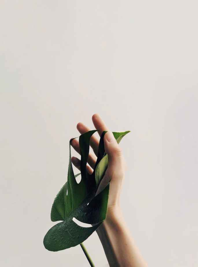 photo of person holding green leaf